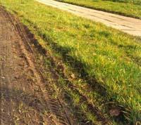 Ruch na powierzchniach trawiastych 2